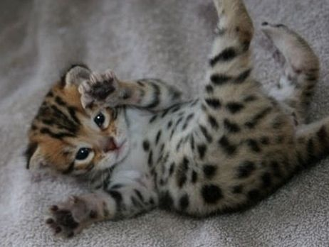 """While they can be described as """"deliciously cute"""", they are not related to the delicious chip either. 