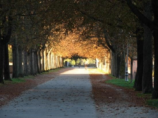 Walls of Lucca with chestnut and plane trees
