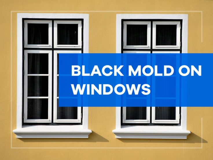 Black Mold on Windows How to Get Rid of It House