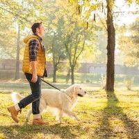#dogalize Addestramento cani: 7 strategie per educare il cane #dogs #cats #pets