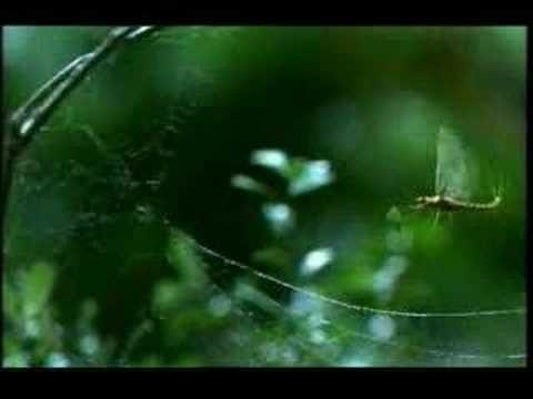 Vodafone - Mayfly - YouTube