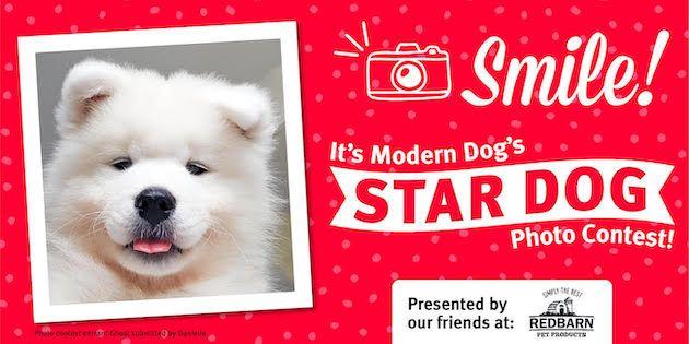 Chloe Dog Photo Contest Dog Photos Cute Dog Photos