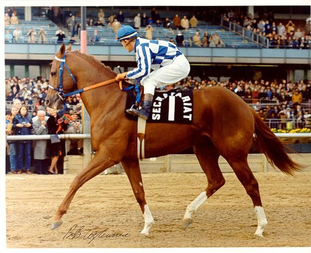 Secretariat - the horse with (literally) a huge heart. By Bold Ruler, out of Somethingroyal x Pricequillo.
