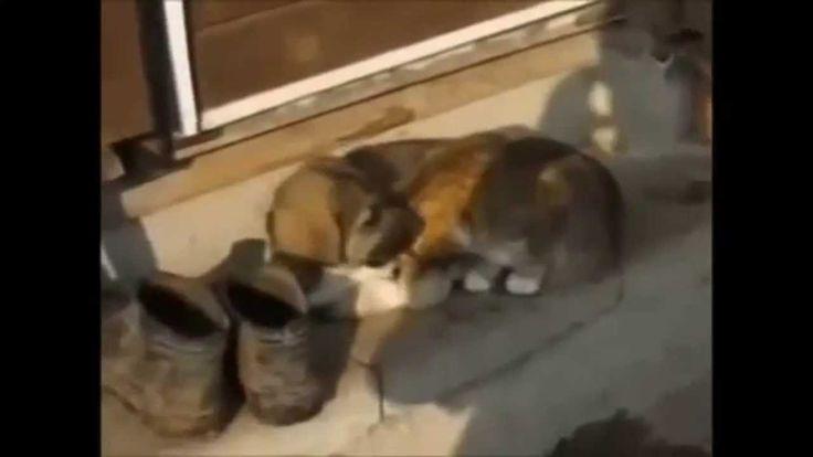 Video di animali divertenti e buffi. Video da ridere