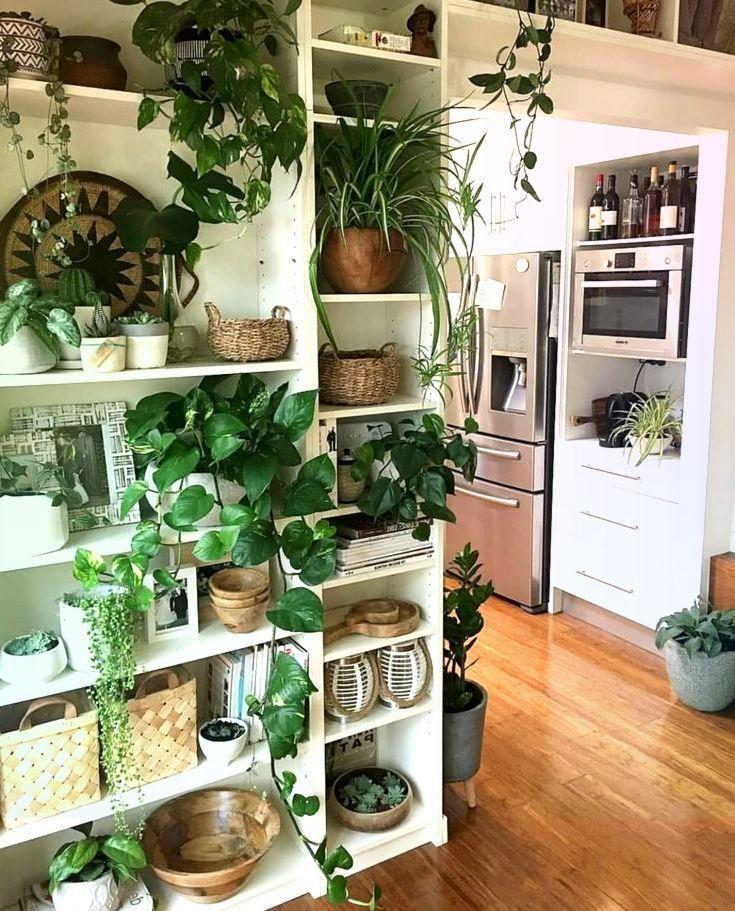 Traumhaus Kuche Pflanze Wand Offenes Regal Regal Edelstahl Holzboden Edel In 2020 Kuchenpflanzen Offenes Regal Holzboden