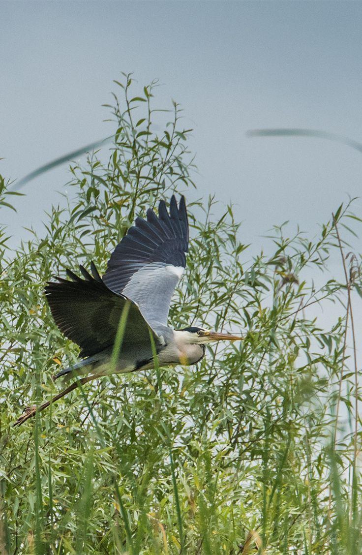 Danube Delta Biosphere Reserve Romania. Europe's most well preserved river delta.