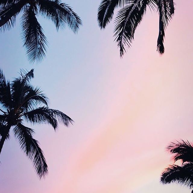 Preppy S Got 21 Pretty Wallpapers For Your New Iphonexs Iphonexsmax Iphonexr Iph Tree Wallpaper Iphone Sunset Iphone Wallpaper Wallpaper Iphone Summer