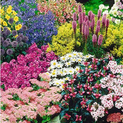 """Staudenbeet """"Gartenfreude"""",15 Pflanzen"""