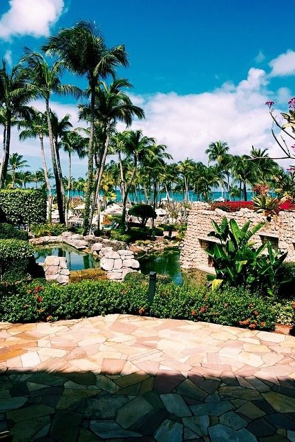 Experience a glimpse of paradise at Hyatt Regency Aruba. Photo courtesy of Max Hoffmann.