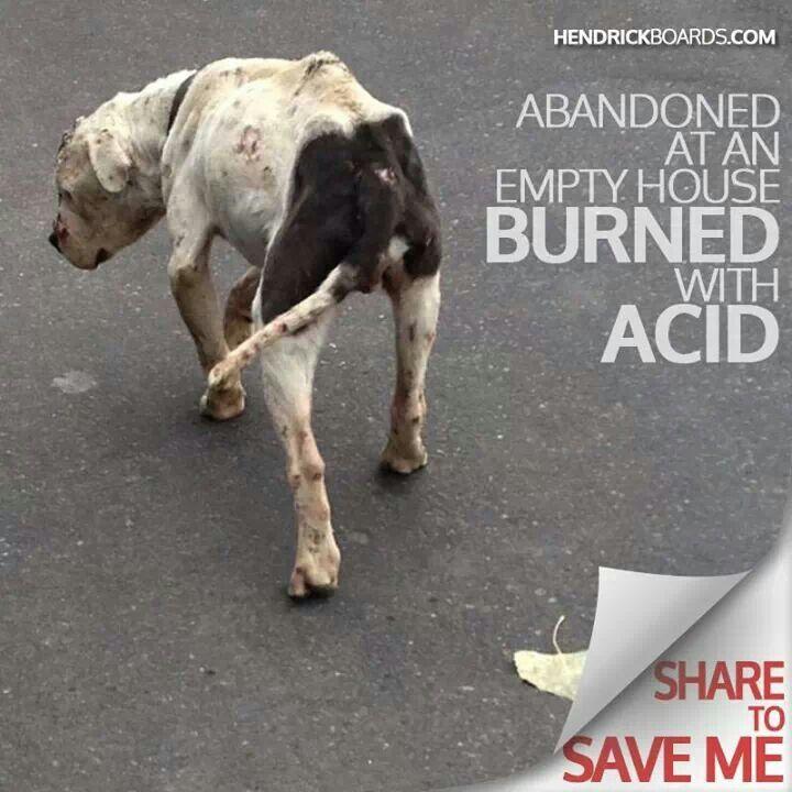 Animal abuse argumentative essay