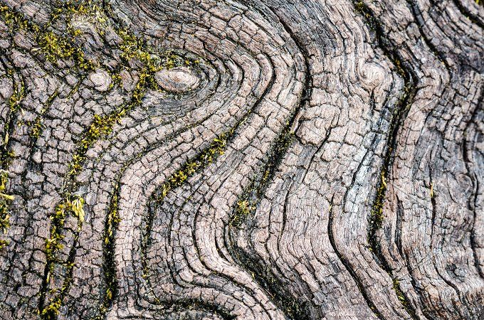Texture of old wood Photos Texture of old wood in nature that is water erosion. by Yongkiet