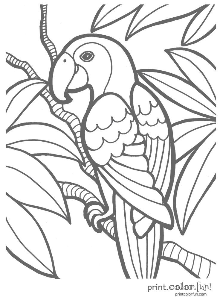 Parrot Coloring Page Print Color Fun