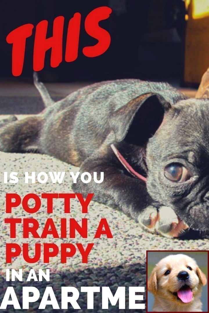 1 Have Dog Behavior Problems Learn About Dog Behavior Hiding Under Bed And Dog Training House Training Puppies Puppy Training Potty Training Puppy Apartment