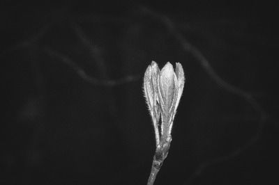 bwstock.photography - photo | free download black and white photos  //  #bud