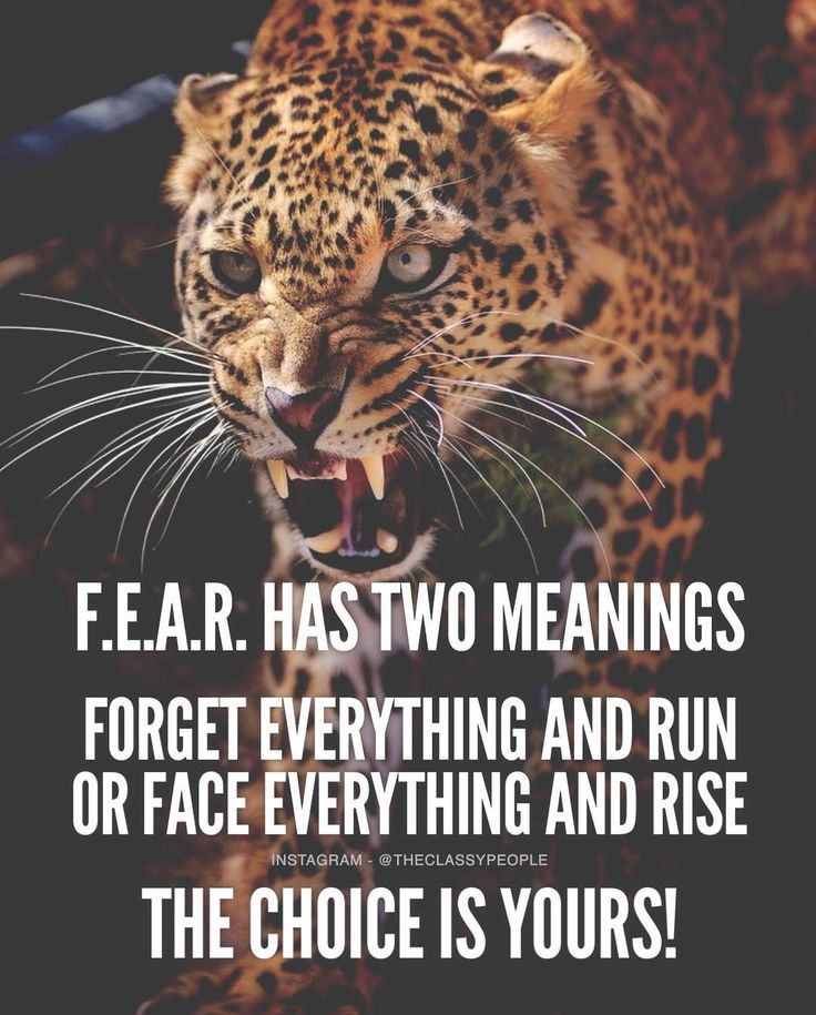 17 Best Sucess Quotes on Pinterest | Success quotes, Working hard ...