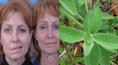 Se trata de una planta cuyas con muha propiedades tienen la capacidad de eliminar muchísimas enfermedades, entre ellas la parálisis, esta planta tiene como nombre la Salvia.    La salvia es un arbusto de hoja perenne con