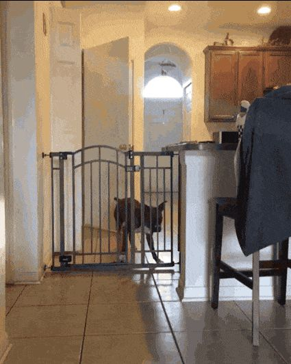 21 Best GIFs Of All Time Of The Week #175 from best GOAT and Best of the Web