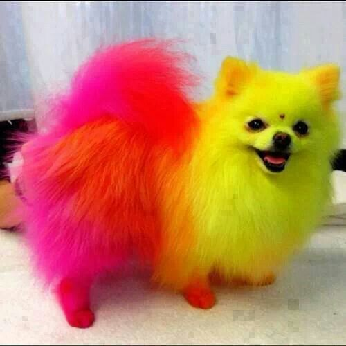 Rainbow Colored Dog Cute And Funny Pinterest