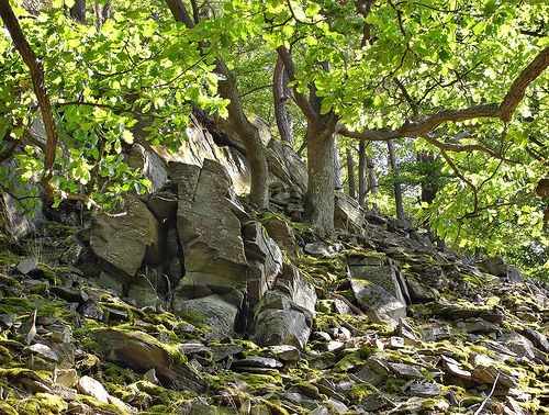 https://flic.kr/p/7vT8oS | Daudenberg: Rocks and oak trees - Felsen und Eichen | Old oaks on the Daudenberg in the Edersee region, a part of Germany where rests of primordial forests still remain.