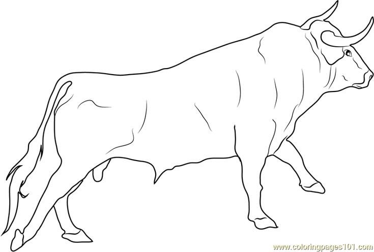 How To Draw Realistic Cows Spanish Fighting Bull
