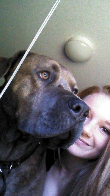Pitbull mastiff mix... My best friend.