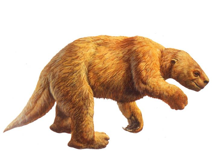 harlans ground sloth image from the la brea tar pits website