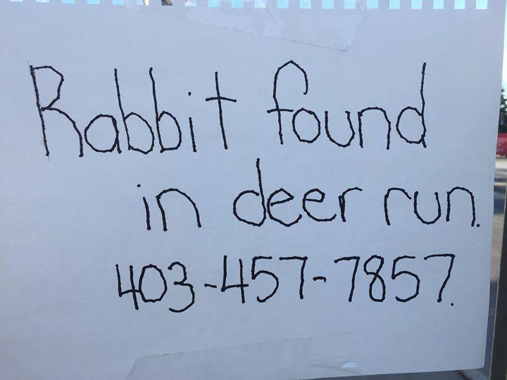 RT @LauraU2girl: Rabbit found in #DeerRun #FishCreek #Calgary #YYC @PetRecoveryYYC #DeerRidge https://t.co/OiMZ1dPG0M