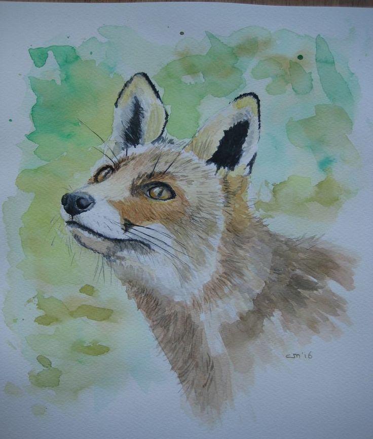 Aquarel Vos / Fox,  27 x 35 cm.