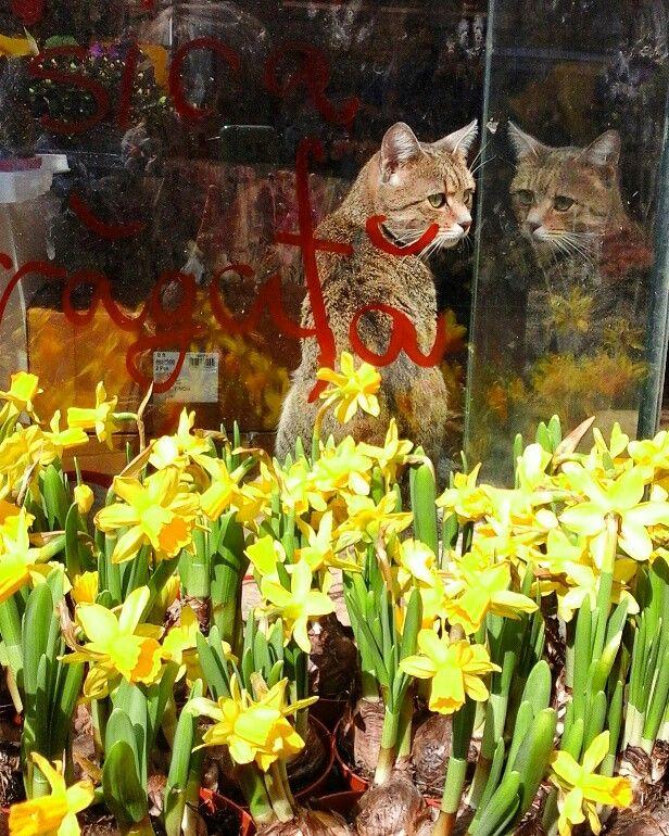 Grigore tge cat in the flowershop..