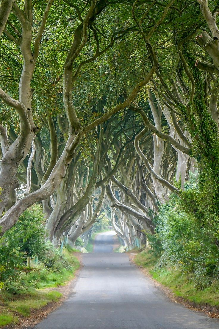 The Dark Hedges - One of my favorite spots on the Antrim Coast, Northern Ireland