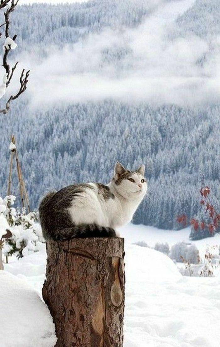 Les 25 meilleures id es de la cat gorie fond d 39 cran for Fond ecran hiver animaux