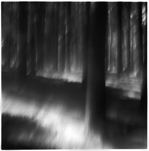 Light in the Forest, New York, 2003 © Frank Dituri