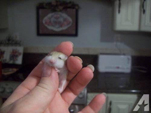 29 best h a m m y images on Pinterest | Bear hamster ...