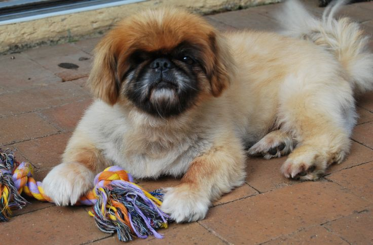 Our beautiful boy Hugo 1996 - 2012