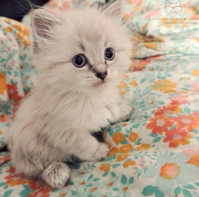 Kittie!!