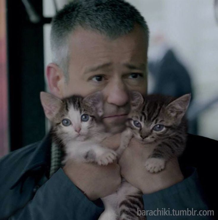 "I wasn't going to reblog at first because I'm like ""There is no way that picture is real"", but then Lestrade kept looking at me with those eyes, and it's like ""All right."""