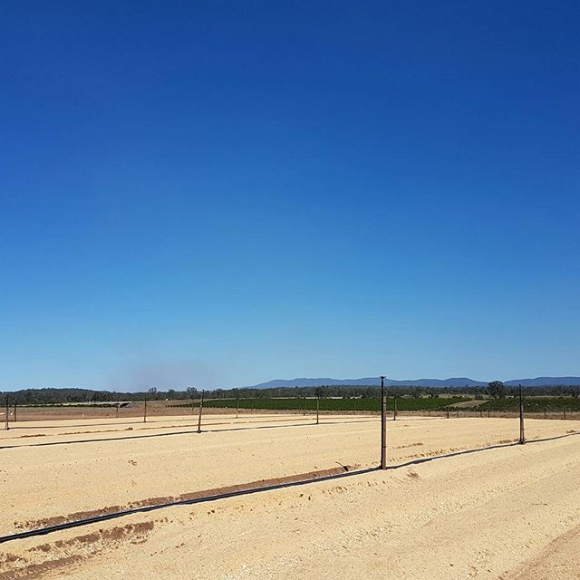 #fridayflashback to when we prepped the soil at Spencer Ranch for our ginger crops. ↔️ Swipe to see the green ginger shoots that have now surfaced. #ginger #aussiefarming #farming #farmlife #irrigation #freshproduce #healthyeating #freshfood #foodie #spencerranch #carterandspencer