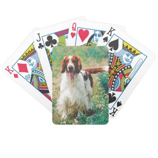 Welsh Springer Spaniel Playing Cards. Set of the world's most well-known and respected playing cards. Made with patented casino quality paper and a color printing process that is second to none, these cards are the mark of the premium quality Bicycle has represented since 1885.