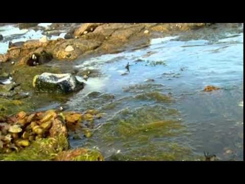 La pêche a pied  #peche