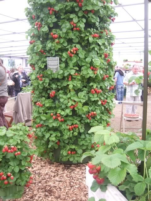 Are You Thinking Of Starting A Hydroponic Garden?