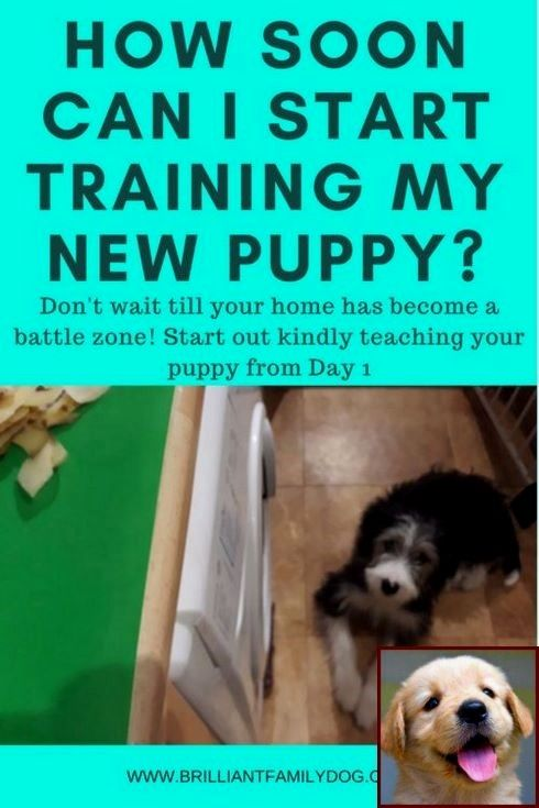 House Training A Puppy In 3 Days And Dog Training Courses In Kenya