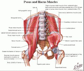 Hip Flexor Pain, Injury and Stretch