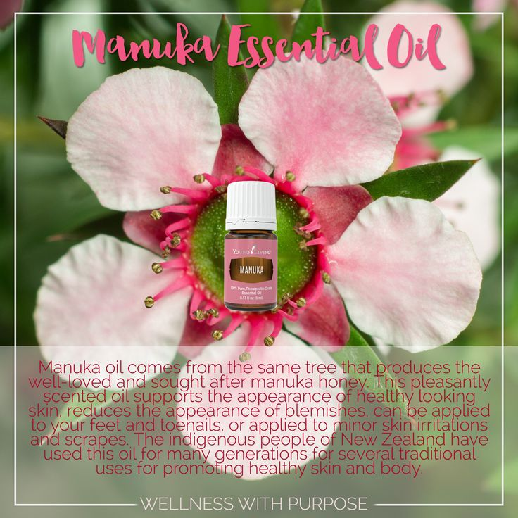 Manuka Essential Oil.  Free Young Living Manuka essential oil in May. #WellnesswithPurpose