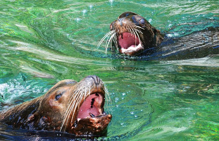 Sea Lions at the Queens Zoo