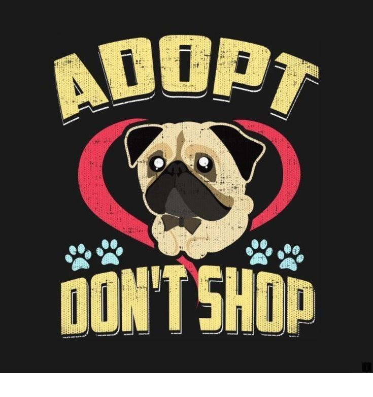 Discover More About Pugs For Adoption Near Me Check The Webpage