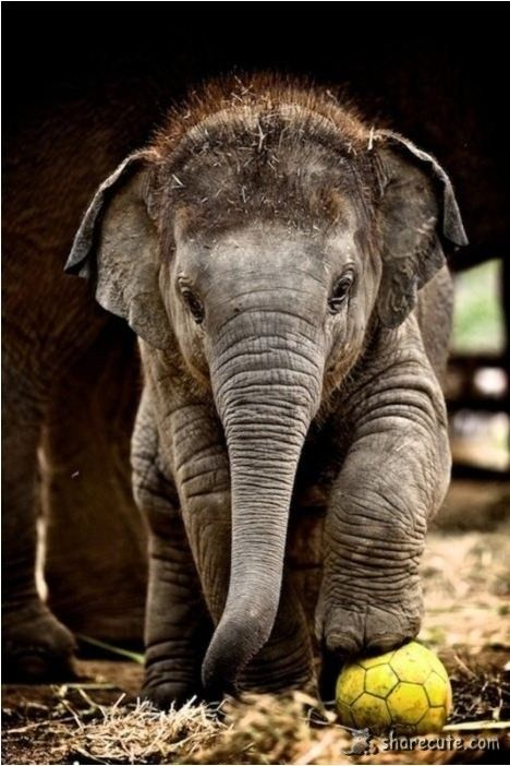Baby elephant - love this baby