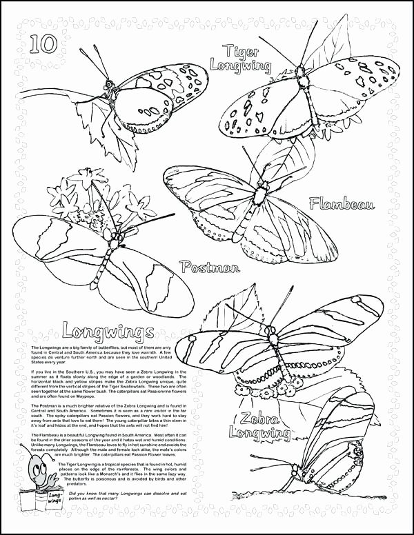Monarch Butterfly Life Cycle Coloring Page Inspirational Life Cycle A Butterfly Drawing At Getdrawi Butterfly Coloring Page Butterfly Life Cycle Coloring Pages