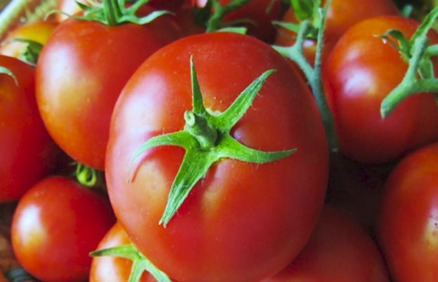 In a new study, a team of scientists has traced the activity of the cancer-fighting tomato component.