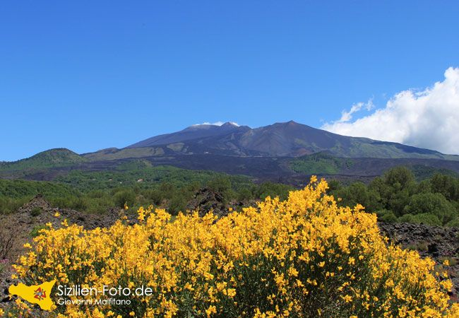 Vulkan Ätna mit blühender Ginster - Sizilien Fotos - Bilddatenbank http://www.sizilien-foto.de/2015/05/vulkan-aetna-mit-bluehender-ginster.html