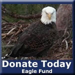 Live eagle cam....where you can watch the eggs hatch and the little ones grow